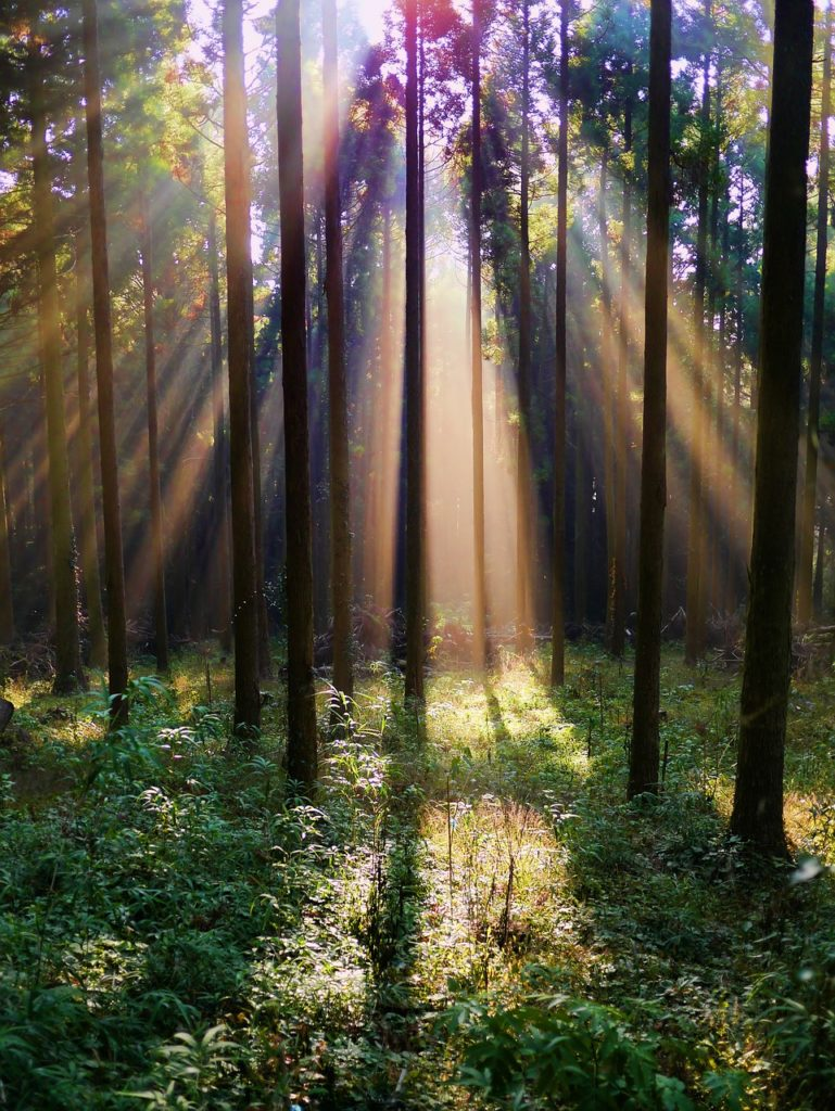 forest, arboretum, mountain